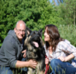 uk-gsr-uk-german-shepherd-rescue-angles001067.jpg